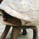 ガラパゴスでゾウカメの甲羅を背負ってみた